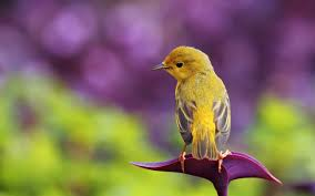 download 2 1 صور طيور  عالية الجودةHD خلفيات و رمزيات طيور منوعة جميلة