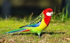 download 3 1 صور طيور  عالية الجودةHD خلفيات و رمزيات طيور منوعة جميلة