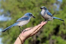 download 4 1 صور طيور  عالية الجودةHD خلفيات و رمزيات طيور منوعة جميلة