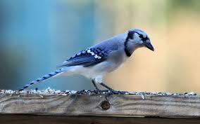 download 5 صور طيور  عالية الجودةHD خلفيات و رمزيات طيور منوعة جميلة