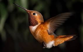 download 6 صور طيور  عالية الجودةHD خلفيات و رمزيات طيور منوعة جميلة