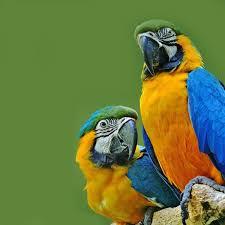 download 7 صور طيور  عالية الجودةHD خلفيات و رمزيات طيور منوعة جميلة