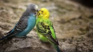 download 8 300x168 صور طيور  عالية الجودةHD خلفيات و رمزيات طيور منوعة جميلة