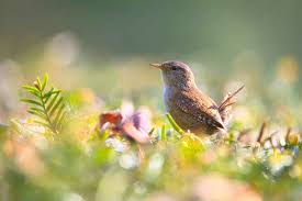 download 9 صور طيور  عالية الجودةHD خلفيات و رمزيات طيور منوعة جميلة