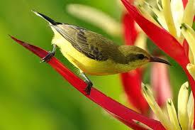 images 1 3 صور طيور  عالية الجودةHD خلفيات و رمزيات طيور منوعة جميلة
