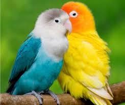 images 10 صور طيور  عالية الجودةHD خلفيات و رمزيات طيور منوعة جميلة