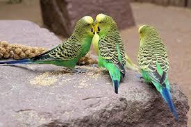 images 12 صور طيور  عالية الجودةHD خلفيات و رمزيات طيور منوعة جميلة