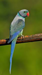 images 13 صور طيور  عالية الجودةHD خلفيات و رمزيات طيور منوعة جميلة