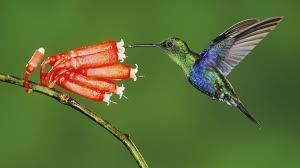 images 14 300x168 صور طيور  عالية الجودةHD خلفيات و رمزيات طيور منوعة جميلة