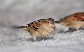 images 15 صور طيور  عالية الجودةHD خلفيات و رمزيات طيور منوعة جميلة