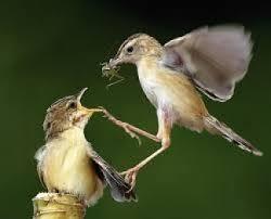 images 16 صور طيور  عالية الجودةHD خلفيات و رمزيات طيور منوعة جميلة