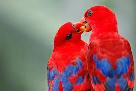 images 17 صور طيور  عالية الجودةHD خلفيات و رمزيات طيور منوعة جميلة