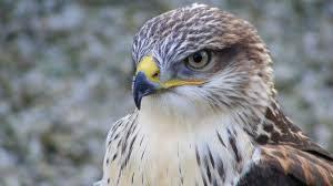 images 19 300x168 صور طيور  عالية الجودةHD خلفيات و رمزيات طيور منوعة جميلة
