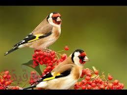 images 20 صور طيور  عالية الجودةHD خلفيات و رمزيات طيور منوعة جميلة