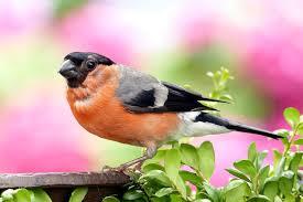 images 21 1 صور طيور  عالية الجودةHD خلفيات و رمزيات طيور منوعة جميلة