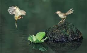 images 22 صور طيور  عالية الجودةHD خلفيات و رمزيات طيور منوعة جميلة