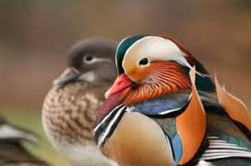 images 25 صور طيور  عالية الجودةHD خلفيات و رمزيات طيور منوعة جميلة