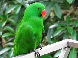images 27 صور طيور  عالية الجودةHD خلفيات و رمزيات طيور منوعة جميلة