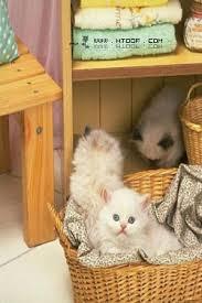 images 33 صور قطط جميلة خلفيات قطط روعة اجمل قطط حلوة للخلفيات 2019