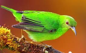 images 4 2 صور طيور  عالية الجودةHD خلفيات و رمزيات طيور منوعة جميلة
