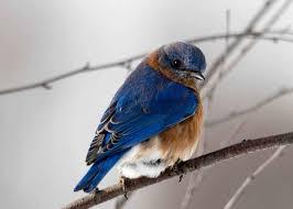 images 6 1 صور طيور  عالية الجودةHD خلفيات و رمزيات طيور منوعة جميلة