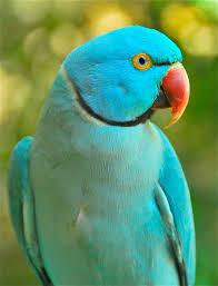 images 7 1 صور طيور  عالية الجودةHD خلفيات و رمزيات طيور منوعة جميلة