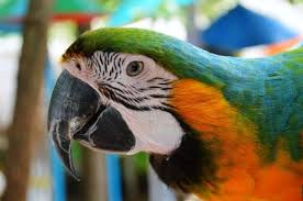 images 8 1 صور طيور  عالية الجودةHD خلفيات و رمزيات طيور منوعة جميلة