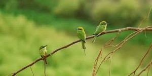 images 9 1 300x150 صور طيور  عالية الجودةHD خلفيات و رمزيات طيور منوعة جميلة