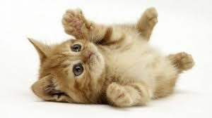 images2 5 300x168 صور قطط جميلة خلفيات قطط روعة اجمل قطط حلوة للخلفيات 2019